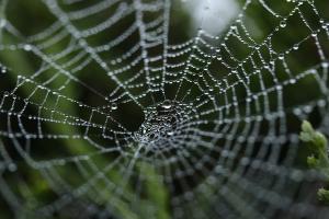 spider_web_piccola